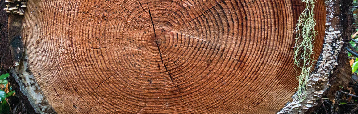tree_rings